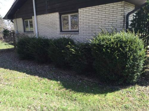 Removing bushes 3 - Before