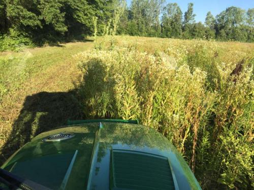 Field Mowing - Weed Height 4 to 5 ft